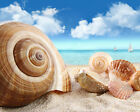 Seashells / Sea Shell - Ocean 8 x 10 GLOSSY Photo Picture IMAGE #3