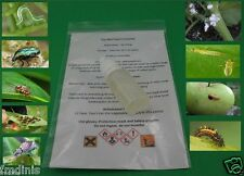 Insecticide  Miticide for Mites, Thrips, Aphids  10ml  ( to 25L Water )
