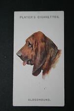 Bloodhound 1920's Vintage Dog Portrait Card # VGC