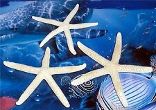 "THREE (3) 3"" to 4"" WHITE PHILIPPINE STARFISH SEA SHELL  BEACH DECOR TROPICAL"