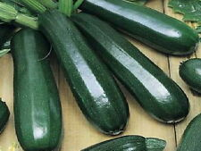 125 Black Beauty Zucchini Summer Squash Seeds + Gift - COMB S/H