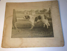 Antique Victorian Newfoundland Dog, Outdoor Pet Animal Old Cabinet Card Photo!