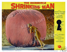 THE INCREDIBLE SHRINKING MAN LOBBY SCENE CARD # 7 POSTER 1957