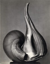 EW100: Centennial Essays in Honor of Edward Weston. En memoria de un genio.