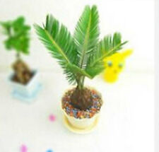 Sementi DI CYCAS IN MINIATURA Bonsai Tree Plant MINI HOME Grow FIORI