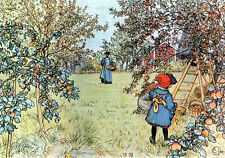 The Apple Harvest   by  Carl Larsson   Giclee Canvas Print Repro