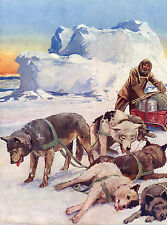 ESKIMO HUSKY SLED DOG TEAM RESTING AFTER LONG TREK OLD 1934 ART PRINT