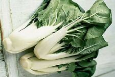 Chinese Cabbage, Pak Choi Heirloom 100+ Fresh Non-GMO Seeds