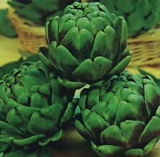 Kings Seeds - Artichoke Green Globe - 40 Seeds