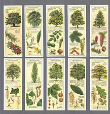 CIGARETTE/TRADE/CARDS. Typhoo Tea.TREES OF THE COUNTRYSIDE. (Set of 25). (1938).