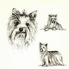 Old Vintage YORKSHIRE TERRIER YORKIE Dog Print Gift Matted 10x8