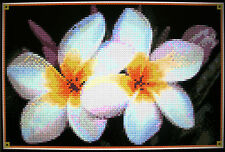 WHITE FRANGIPANIS ~ Counted Cross Stitch KIT #K702