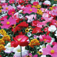 400 Perennial Wildflower Seeds Beautiful colorful Annual TT246