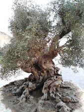 ULIVO SECOLARE albero per presepe e diorama ARTIGIANALE fatto a mano 46 cm