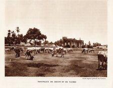 INDE INDIA TROUPEAUX DE BOEUFS ET DE VACHES IMAGE 1939 OLD PRINT