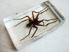 Real Insect Paperweight Taxidermy Specimen Golden Alive Spider Lucid Ice Jewelry