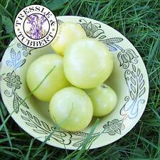 Raras De Tomate-Jirafa 10 Semillas-Reino Unido Vendedor
