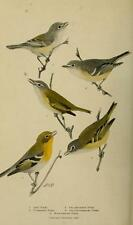 BIRD LORE MAGAZINE 144 issues antique old DVD color prints ORNITHOLOGY 1899-1922