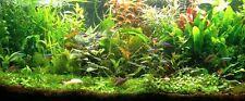 PROMO lot 100 plantes aquarium 13 varietes a racines et tiges  + 3 cladophora en