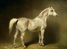 Hand painted Oil painting GRAY WHITE HORSE WITH NICE TAIL STANDING IN STABLE