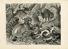 LYNX CATS AFRICA AFRICAN WILDLIFE  ANIMALS NATURAL HISTORY ANTIQUE PRINT 1878