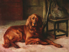 IRISH SETTER DOG GREETINGS NOTE CARD DOG WAITS BY GUN FOR MASTER