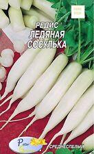 Graines de radis Glace de  glaçon - Graines Potager Légumes - 300 graines