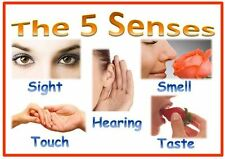THE 5 SENSES - A4 POSTER- DISPLAY- CLASSROOM/CHILDMINDER/HOME/EYFS RESOURCE