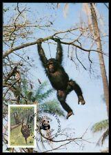 SIERRA LEONE MK AFFEN SCHIMPANSE CHIMPANZEE MONKEY CARTE MAXIMUM CARD MC CM ba47