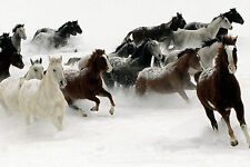 Horses Running In Snow Animals Poster 12x18 Inch Art Silk Fabric Canvas Print 41