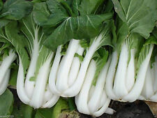 3,500 Seeds Bok Choy (Pak Choi) non-heading Chinese Cabbage