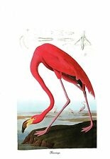 "1978 Vintage AUDUBON BIRDS ""FLAMINGO"" STUNNING Color Art JUMBO Lithograph"