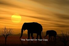 Mother & Baby Elephants in African Sunset Large A3 Size Photo Poster Scene View
