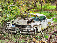 1958 Cadillac being swallowed up in junk yard by nature 8 x 10 Photograph