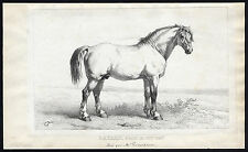Antique Print-BAYARD-STALLION-DRAFT HORSE-VANEUTSEM-Journal des Haras-1856