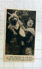 1919 The Hon Mrs Macalister With Young Hyena For The Zoo