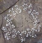 "Wedding Hair Vine Tiara crown bridal bridesmaids baby's breath Gypsophila 20"" UK"