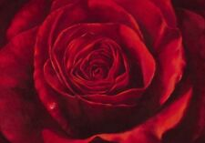 large dark red rose bud flower art floral day picture print 60x80 litho