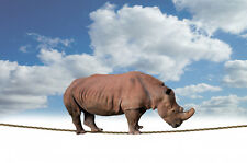 """perfect 36x24 oil painting handpainted on canvas""""Rhino Balancing On Rope """"NO4198"""
