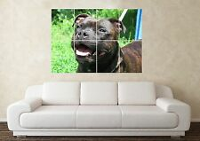 Grandi Staffordshire Bull Terrier Staffy Dog Crufts PEDIGREE Muro Poster Art PICT
