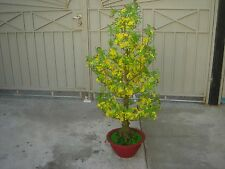 "plastic artificial yellow apricot flower tree with pot 57"" tall (hoa mai)"