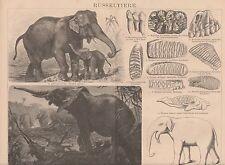 Elefanten Indischer Afrikanischer Elefant HOLZSTICH von 1886 Dinotherium