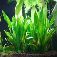 Fish Tank Aquarium Decor Green Artificial Plastic Water Grass Plant Ornament Hot