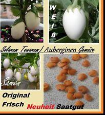 10x Solanum Aubergine Samen Saatgut Pflanze Gemüse essbar lecker Garten #162
