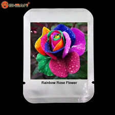 Rosa arcoiris Rainbow flower Rose 100 semillas