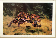 (PRL) 1998 LEOPARDO LIVING NATURE VINTAGE AFFICHE PRINT ART POSTER COLLECTION