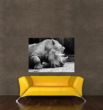 GIANT PRINT POSTER NATURE PHOTO RHINO BLACK WHITE HORN RHINOCEROS PDC104