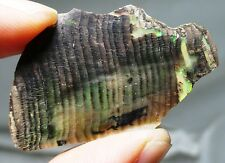 13.4 ct Opalized wood fossil - Virgin Valley opal - Miocene - Denio, NV fossil