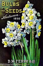1898 Ferry Daffodil Vintage Flowers Seed Packet Catalogue Advertisement Poster