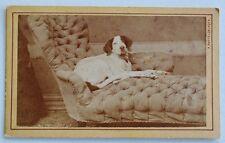 Antique CDV Dog Photograph ~ Recumbent Hound